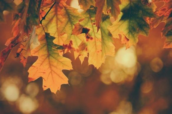 De-herfst-van-het-leven